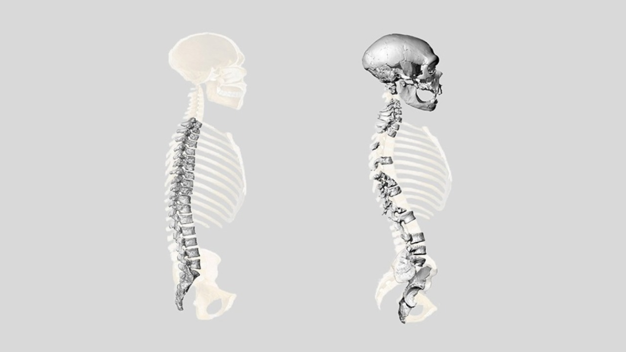 A comparison of past and present reconstructions of the Neanderthal spine. Image: University of Zurich