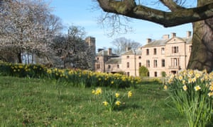 Daffodils at Cambo House, Kingsbarns, St Andrews, Scotland