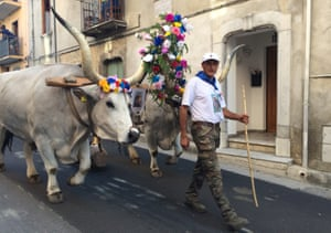 Decorated oxen haul a huge beech tree through the streets of Rotonda at its San Antonio festival.