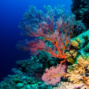 A coral reef off Palau