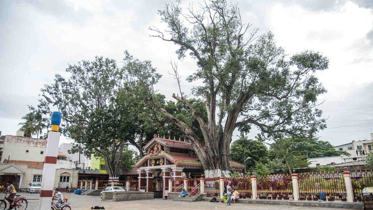 Sacred sites in Bengaluru: Where heritage helps conserve biodiversity