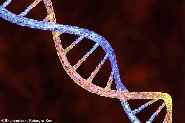 Researchers studied genetic and survey data from over 470,000 volunteers taken from the UK Biobank and 23andMe.com. Pictured, an artist's impression of human DNA