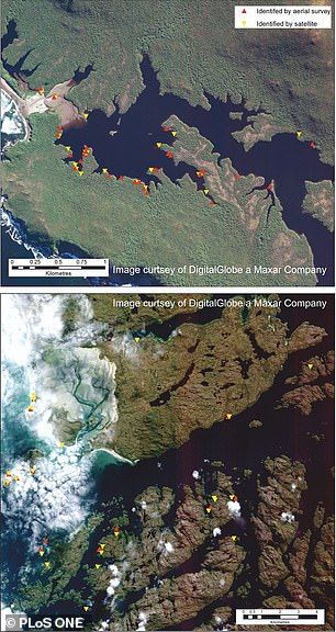 The red triangles are whales found by satellites and the yellow triangles highlight those spotted by a flight survey