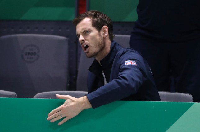 Andy Murray shouts during Great Britain's Davis Cup run