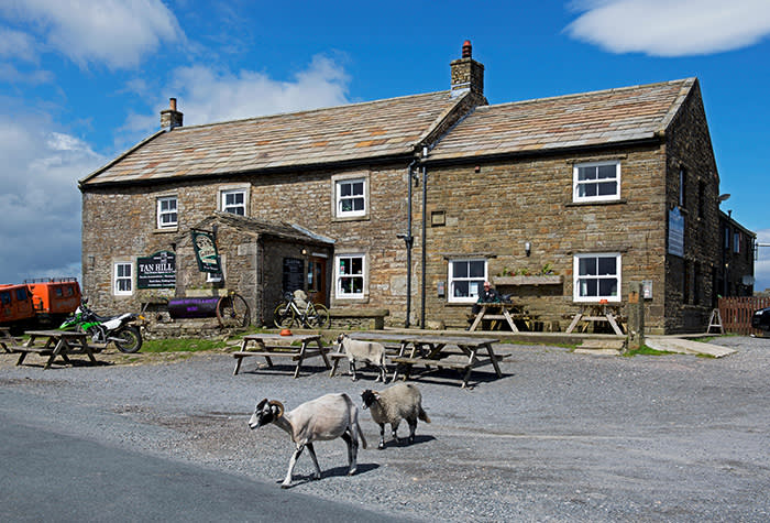 JRRN6E Sheep crossing road at the Tan Hill Inn, the highest pub in the country, North Yorkshire, England UK