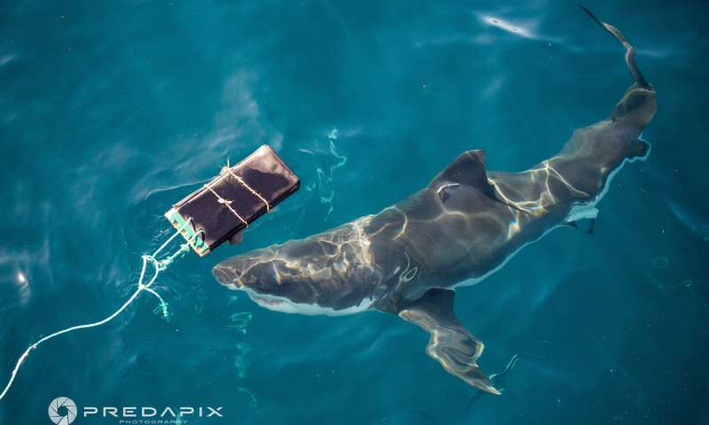 Shark proof wetsuit material could help save lives
