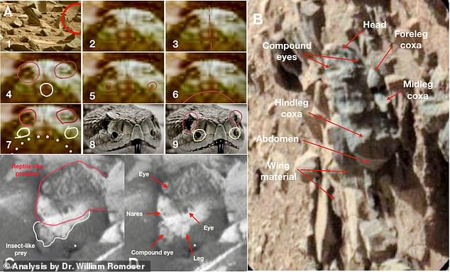 In a study put together by Romoser, he discussed 'a putative reptile-like fossil compared to a Terran snake'. The fossil shows the snakes beady eyes, two front nostrils and even an insect in its mouth