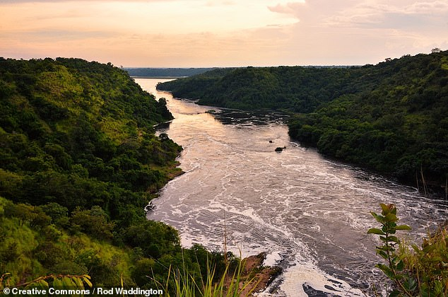 From analyses of rocks along the river and simulations, experts determined that the river's northward flow has been maintained by movements in the Earth mantle beneath. Pictured, the Nile as it appears upstream, in Uganda