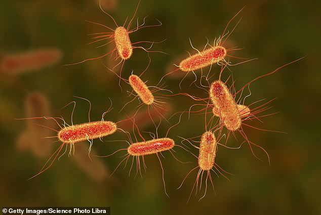 Modified E. coli could be used to generate other chemicals in future (stock)