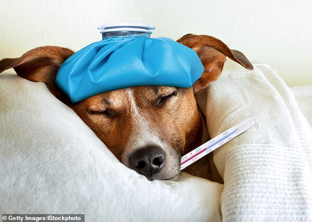 The solution, if you are unlucky enough to contract the flu, is not at your GP surgery - even if you are feeling as sick as a dog. By coming in, you¿ll simply infect other unwell people, and for them the virus could prove deadly