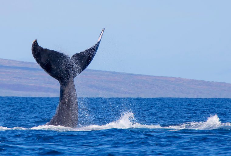 While Markets Move Sideways, Crypto Whale Sightings Increase