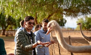 Shot of two young men feeding ostriches on an ostrich farm
