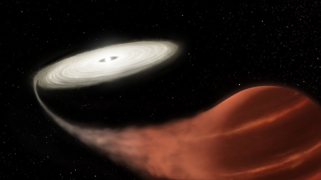 "Embargoed to 1500 Friday January 24 Undated handout artist's impression issued by NASA of a ""vampire"" system. A ""vampire"" star in the midst of a feeding frenzy has been discovered 3,000 light years away from Earth. PA Photo. Issue date: Friday January 24, 2020. Astronomers found evidence of a white dwarf star near the constellation of Scorpius ""gorging"" on a much smaller brown dwarf companion. See PA story SCIENCE VampireStar. Photo credit should read: L. Hustak/NASA/STScI/PA Wire NOTE TO EDITORS: This handout photo may only be used in for editorial reporting purposes for the contemporaneous illustration of events, things or the people in the image or facts mentioned in the caption. Reuse of the picture may require further permission from the copyright holder."
